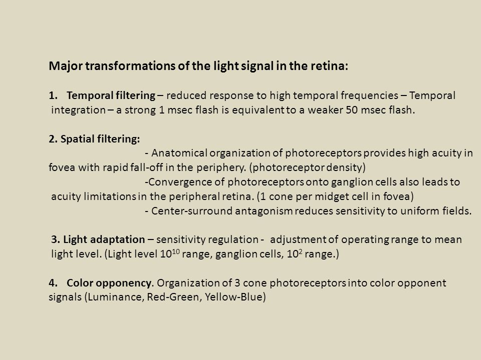 Major transformations of the light signal in the retina: 1.Temporal filtering – reduced response to high temporal frequencies – Temporal integration – a strong 1 msec flash is equivalent to a weaker 50 msec flash.
