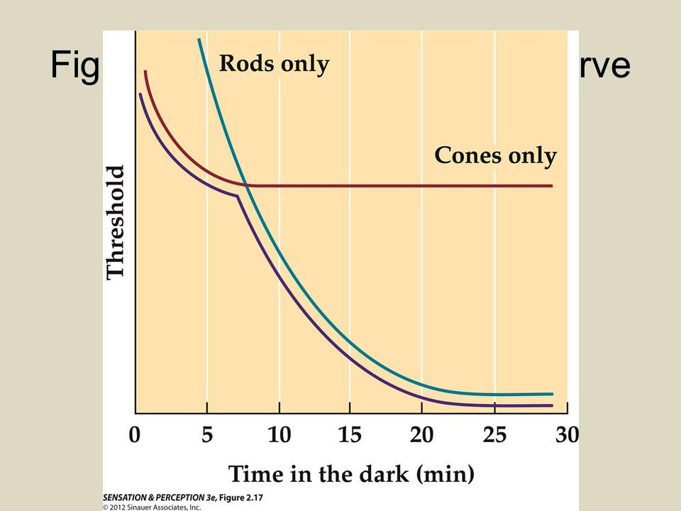 Figure 2.17 Dark adaptation curve