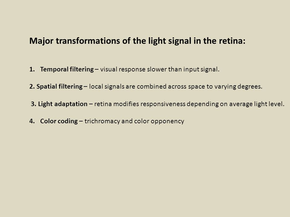 The Eye and Retina Pigment epithelium reduces scatter Important vegetative functions iris pupil Note – blind spot - cf damage to peripheral retina Visualize retinal blood vessels.
