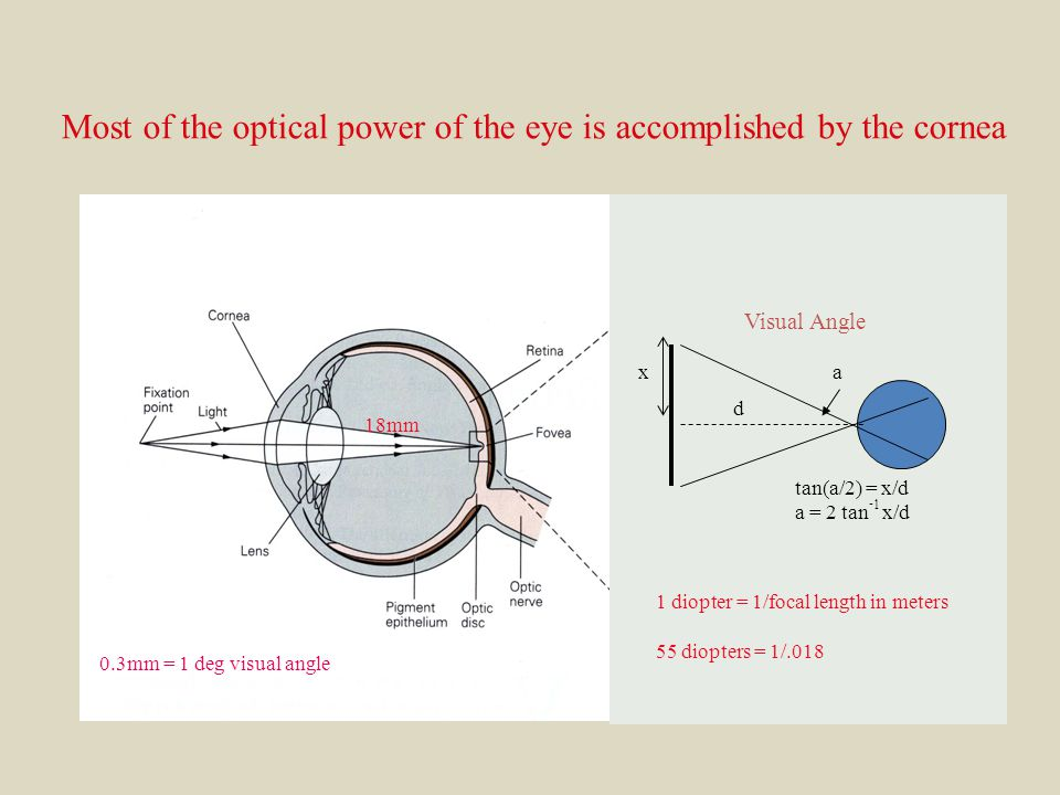 18mm 0.3mm = 1 deg visual angle xa tan(a/2) = x/d a = 2 tan - 1 x/d Visual Angle d 1 diopter = 1/focal length in meters 55 diopters = 1/.018 Most of the optical power of the eye is accomplished by the cornea