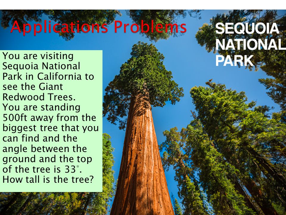  You are visiting Sequoia National Park in California to see the Giant Redwood Trees.