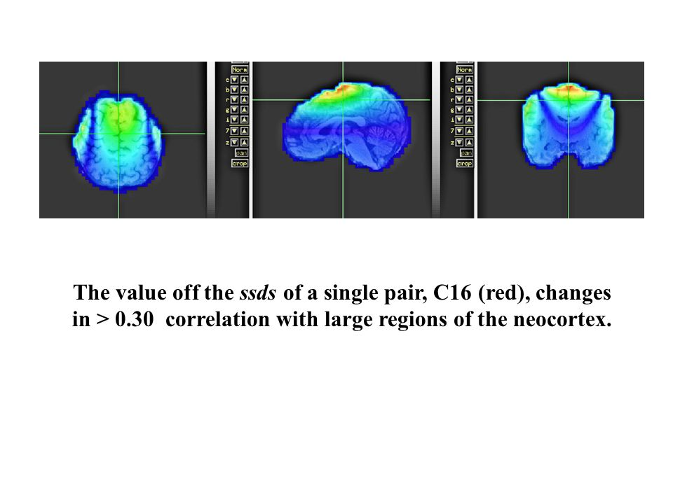 The value off the ssds of a single pair, C16 (red), changes in > 0.30 correlation with large regions of the neocortex.