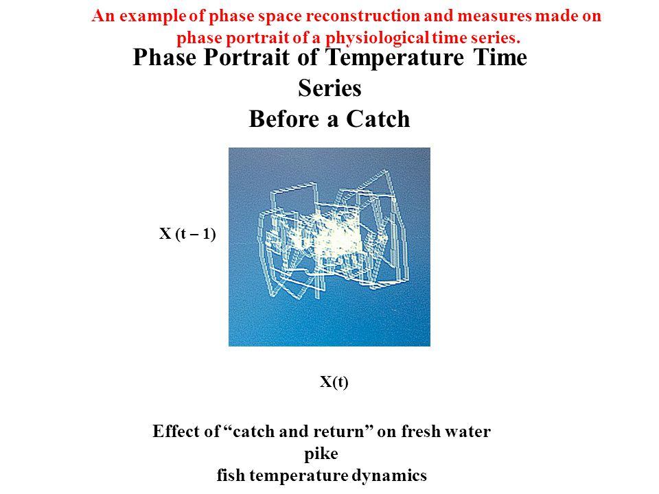 Phase Portrait of Temperature Time Series Before a Catch X(t) X (t – 1) Effect of catch and return on fresh water pike fish temperature dynamics An example of phase space reconstruction and measures made on phase portrait of a physiological time series.