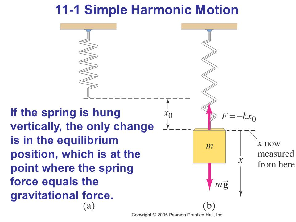 11-1 Simple Harmonic Motion If the spring is hung vertically, the only change is in the equilibrium position, which is at the point where the spring force equals the gravitational force.