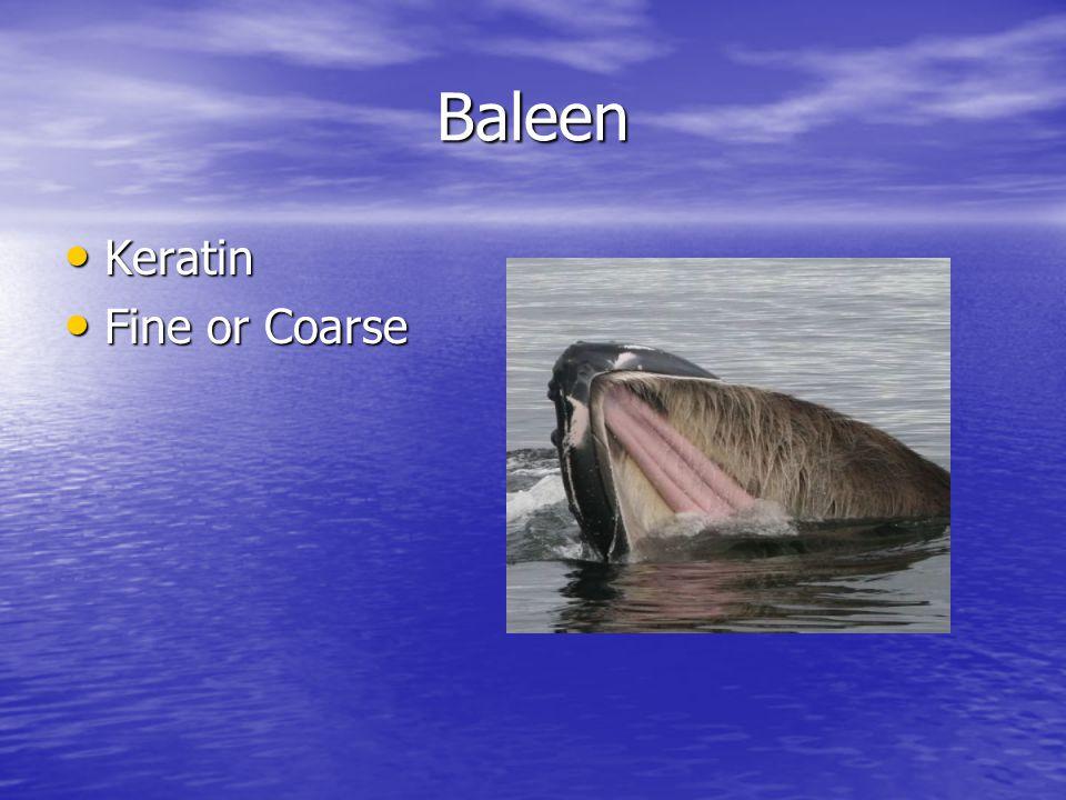 Baleen Keratin Keratin Fine or Coarse Fine or Coarse