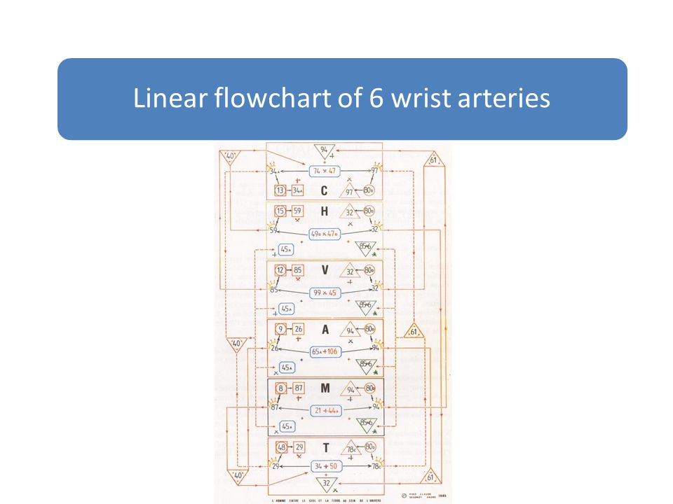 Linear flowchart of 6 wrist arteries