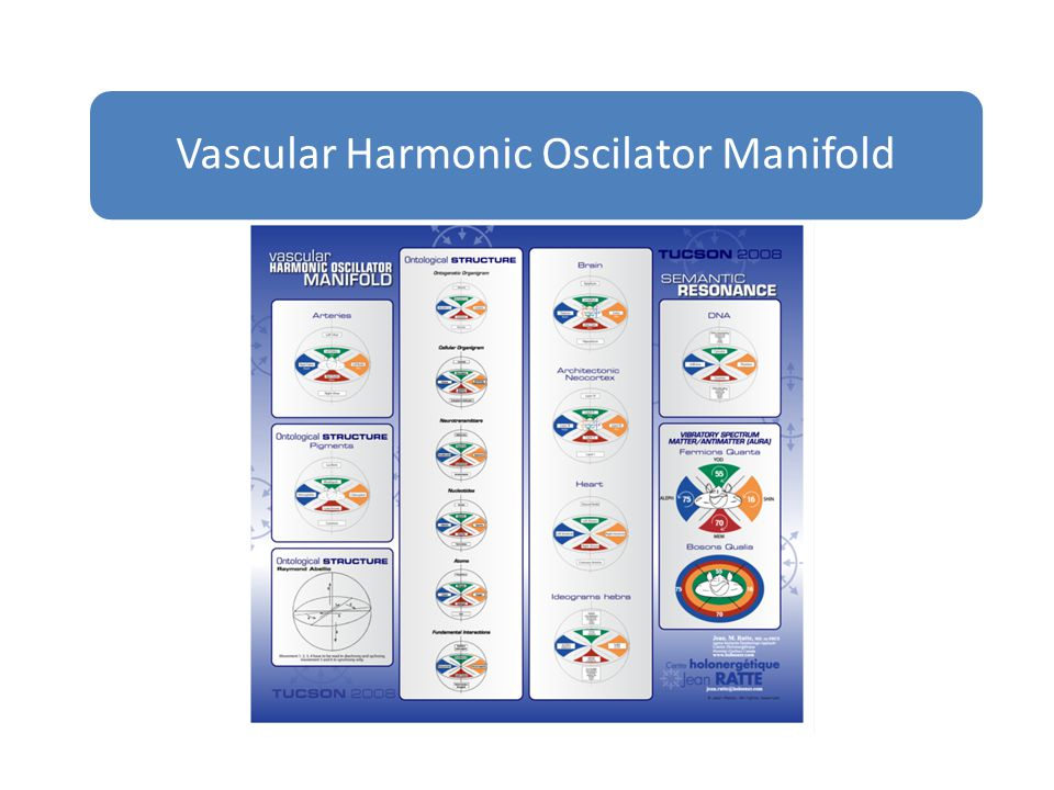 Vascular Harmonic Oscilator Manifold