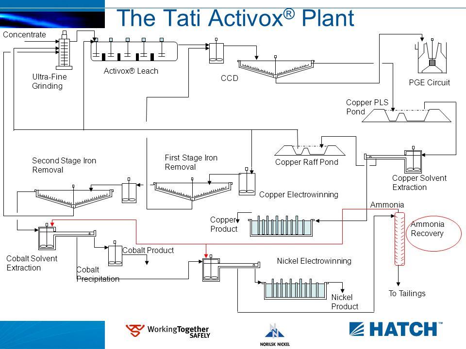 5 The Tati Activox ® Plant