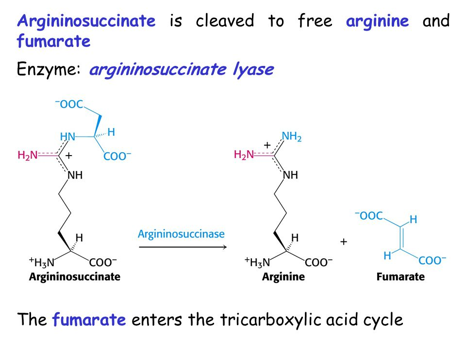 Argininosuccinate is cleaved to free arginine and fumarate Enzyme: argininosuccinate lyase The fumarate enters the tricarboxylic acid cycle
