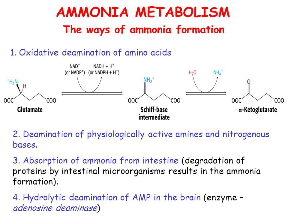 AMMONIA METABOLISM The ways of ammonia formation 1.