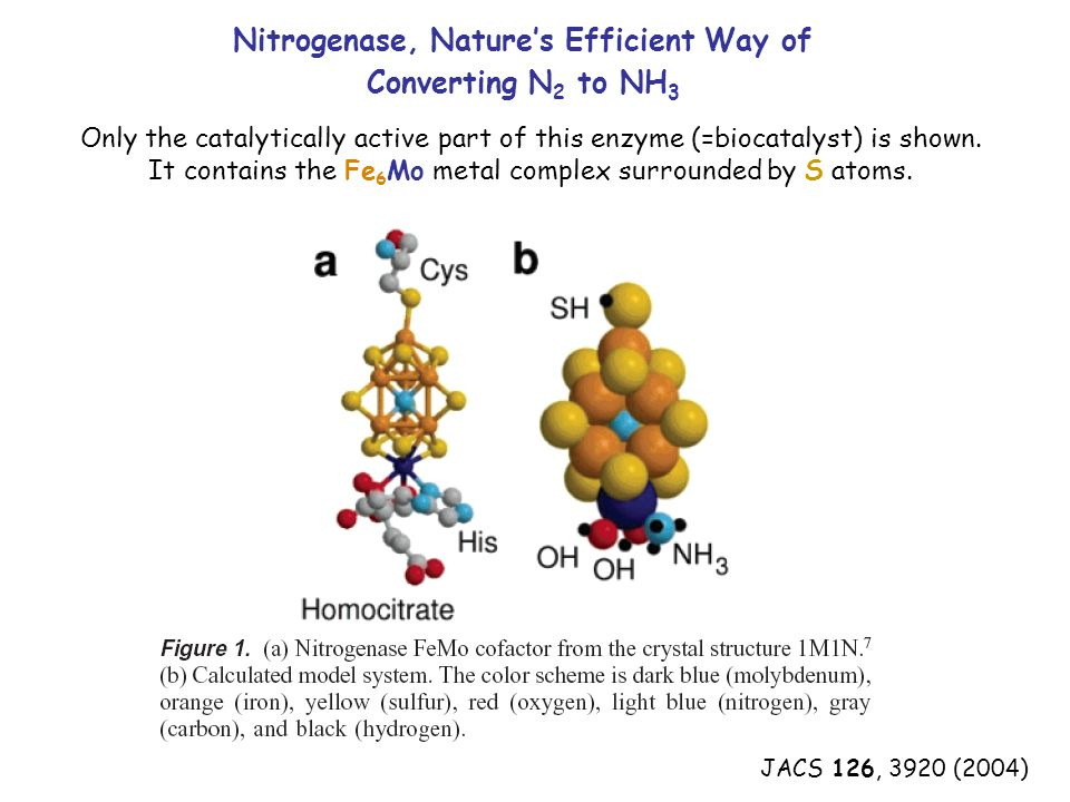 JACS 126, 3920 (2004) Nitrogenase, Nature's Efficient Way of Converting N 2 to NH 3 Only the catalytically active part of this enzyme (=biocatalyst) is shown.