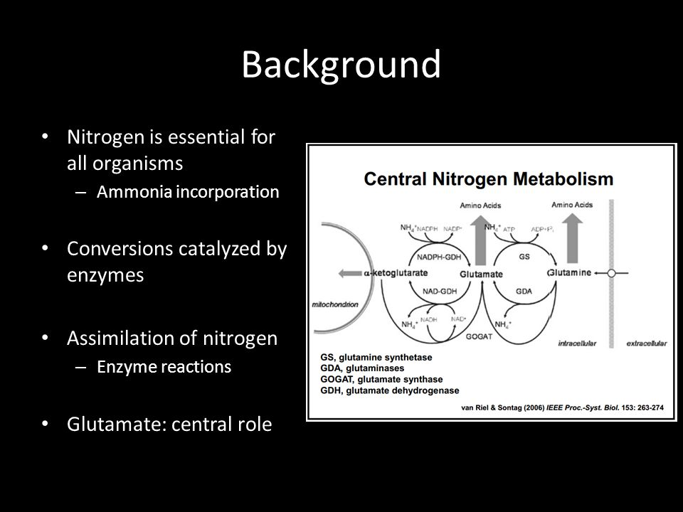 Background Nitrogen is essential for all organisms – Ammonia incorporation Conversions catalyzed by enzymes Assimilation of nitrogen – Enzyme reactions Glutamate: central role