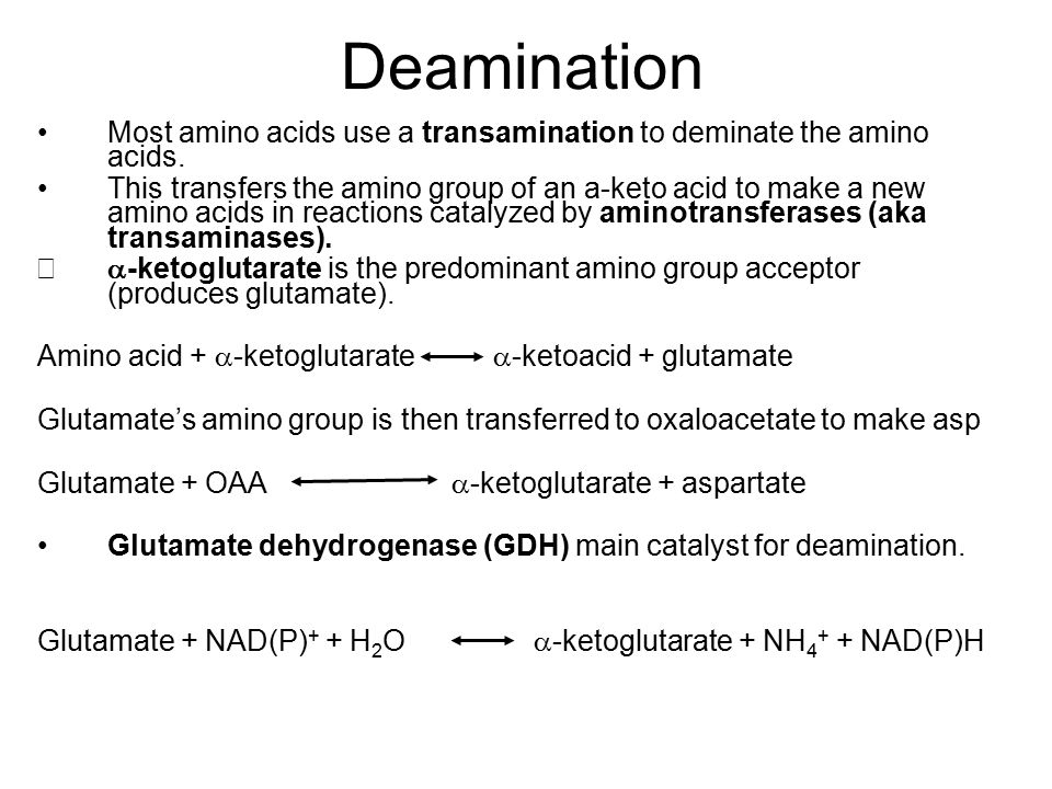 Transamination Aminotransferase reactions occur in 2 stages: 1.The amino group of an amino acid is transferred to the enzyme: Amino acid + enzyme  -keto acid + enzyme-NH 2 2.The amino group is transferred to the keto acid acceptor,  - ketoglutarate to form glutamate and regenerate the enzyme.