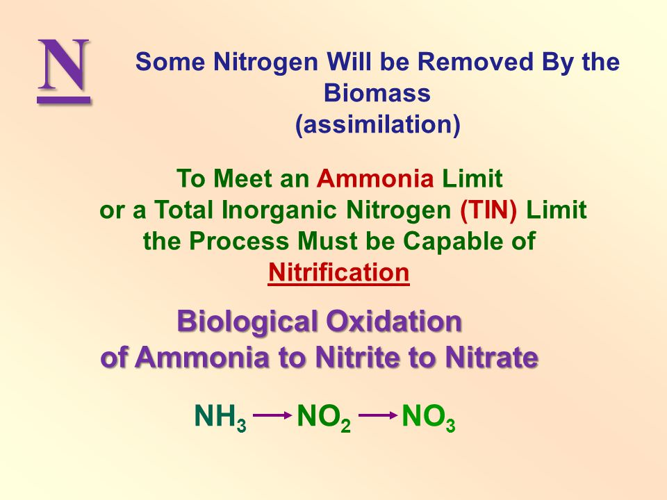 N To Meet an Ammonia Limit or a Total Inorganic Nitrogen (TIN) Limit the Process Must be Capable of Nitrification Some Nitrogen Will be Removed By the Biomass (assimilation) NH 3 NO 2 NO 3 Biological Oxidation of Ammonia to Nitrite to Nitrate