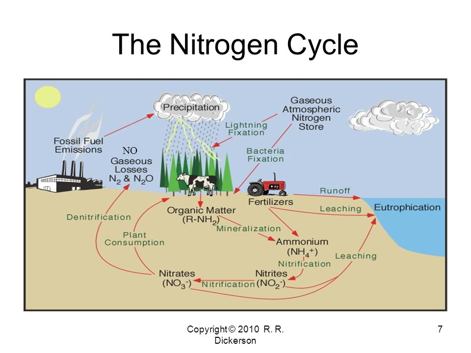 Copyright © 2010 R. R. Dickerson 7 The Nitrogen Cycle NO