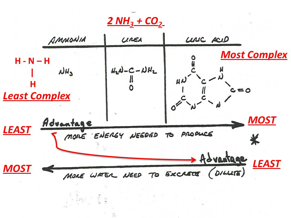 2 NH 3 + CO 2 Least Complex Most Complex H - N – H | H LEAST MOST