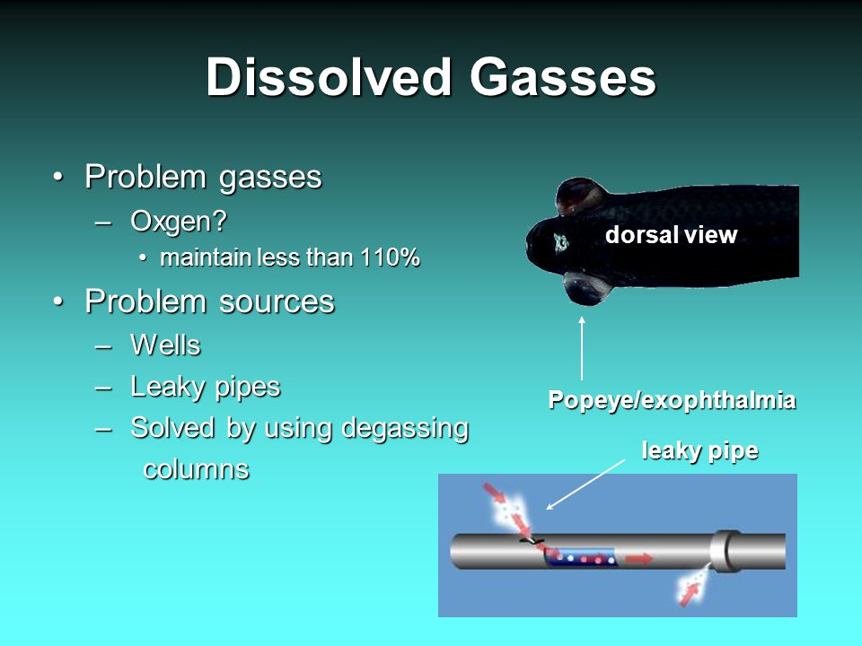Dissolved Gasses Problem gassesProblem gasses – Oxgen? maintain less than 110%maintain less than 110% Problem sourcesProblem sources – Wells – Leaky p