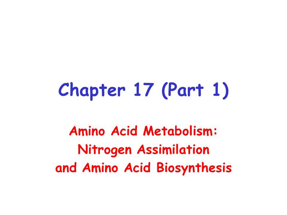 Chapter 17 (Part 1) Amino Acid Metabolism: Nitrogen Assimilation and Amino Acid Biosynthesis