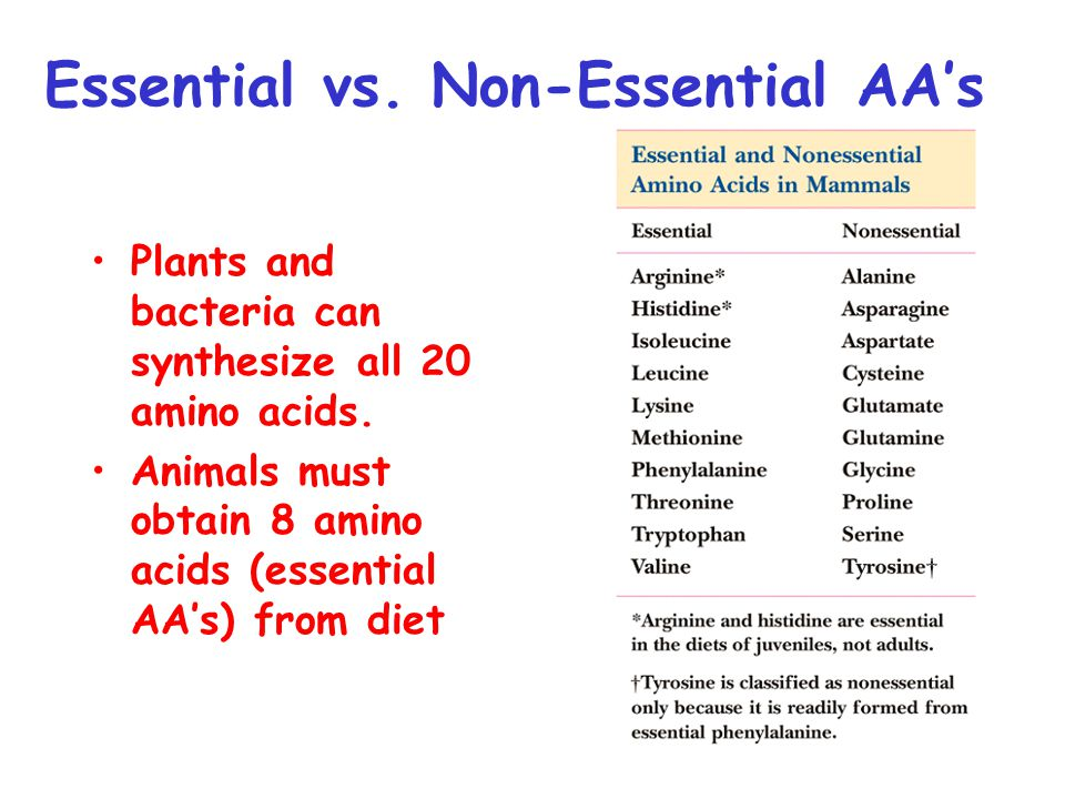 Essential vs. Non-Essential AA's Plants and bacteria can synthesize all 20 amino acids.