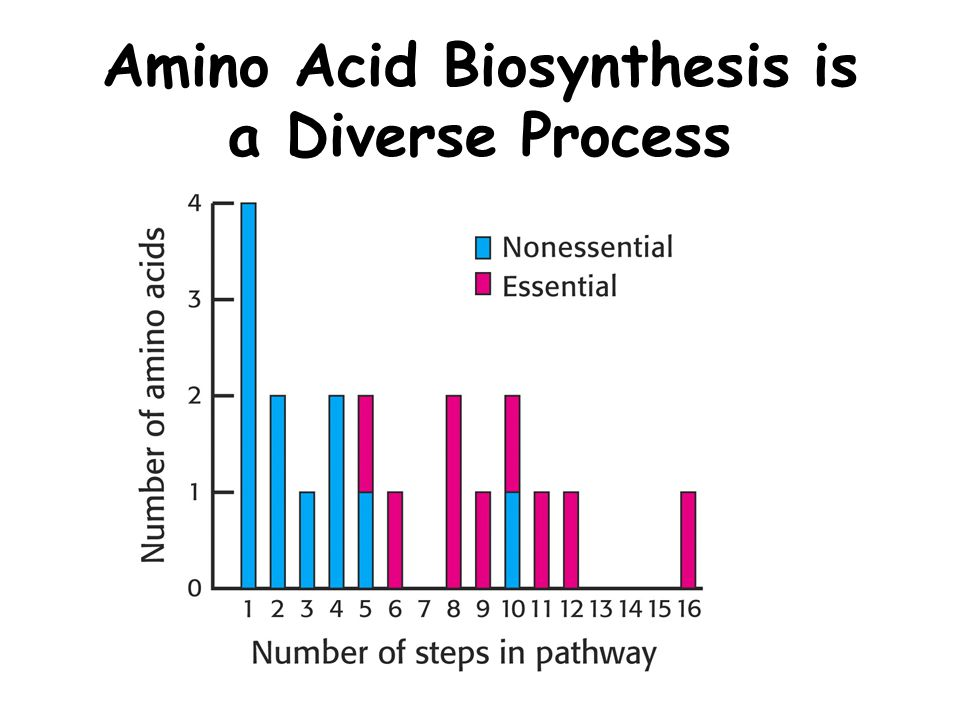 Amino Acid Biosynthesis is a Diverse Process