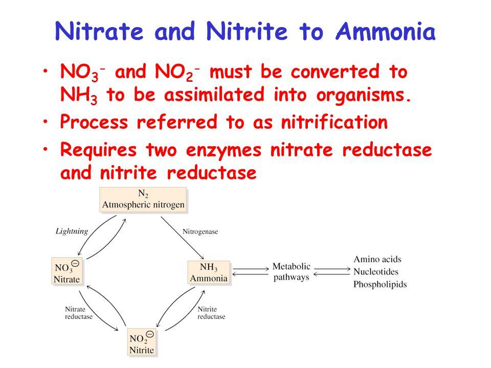 Ammonia Assimilation Glutamate dehydrogenase - reductive amination of  -ketogluturate to glutamate.