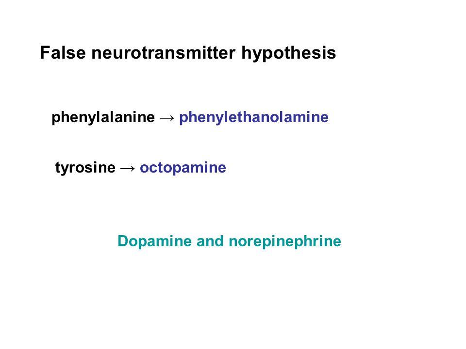 False neurotransmitter hypothesis phenylalanine → phenylethanolamine tyrosine → octopamine Dopamine and norepinephrine
