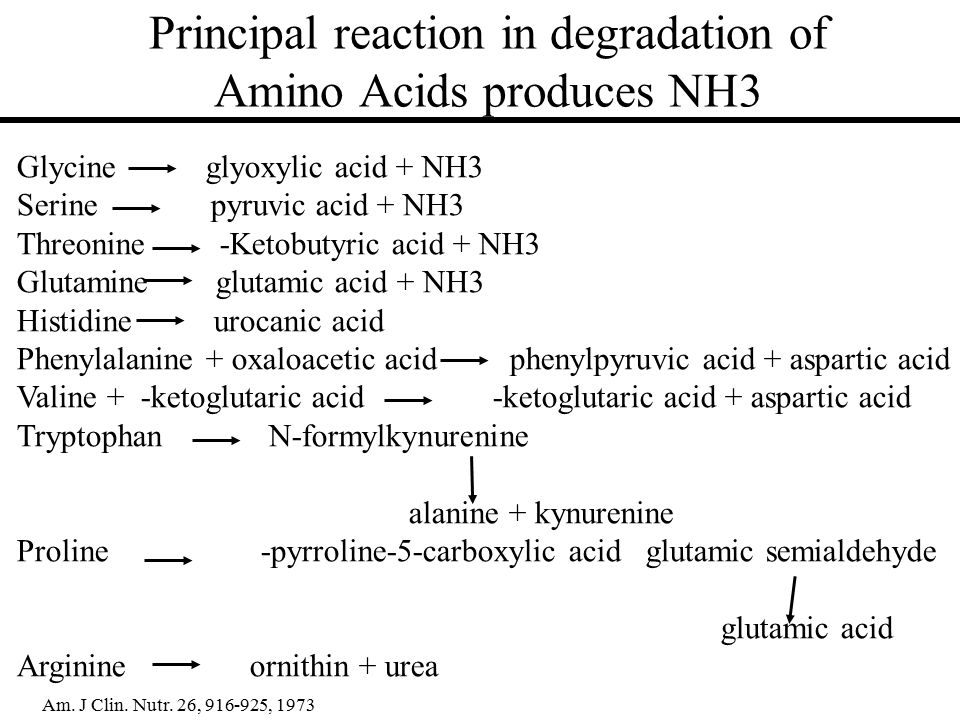 Principal reaction in degradation of Amino Acids produces NH3 Glycine glyoxylic acid + NH3 Serine pyruvic acid + NH3 Threonine -Ketobutyric acid + NH3