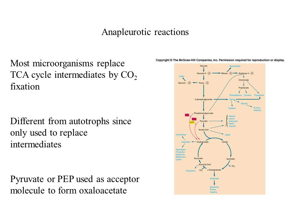 Anapleurotic reactions Most microorganisms replace TCA cycle intermediates by CO 2 fixation Different from autotrophs since only used to replace intermediates Pyruvate or PEP used as acceptor molecule to form oxaloacetate