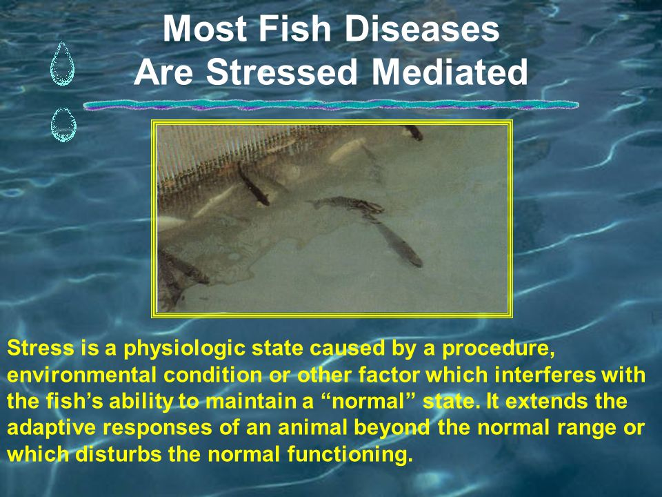 Most Fish Diseases Are Stressed Mediated Stress is a physiologic state caused by a procedure, environmental condition or other factor which interferes with the fish's ability to maintain a normal state.