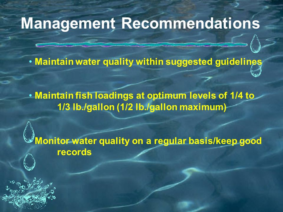 Management Recommendations Maintain water quality within suggested guidelines Maintain fish loadings at optimum levels of 1/4 to 1/3 lb./gallon (1/2 lb./gallon maximum) Monitor water quality on a regular basis/keep good records