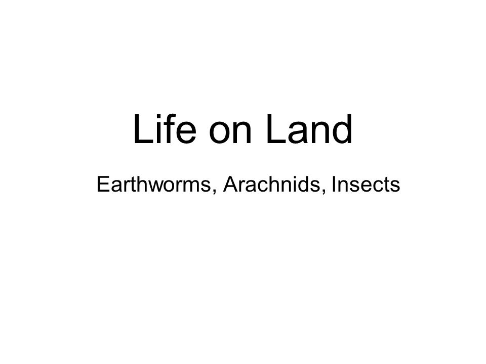Life on Land Earthworms, Arachnids, Insects