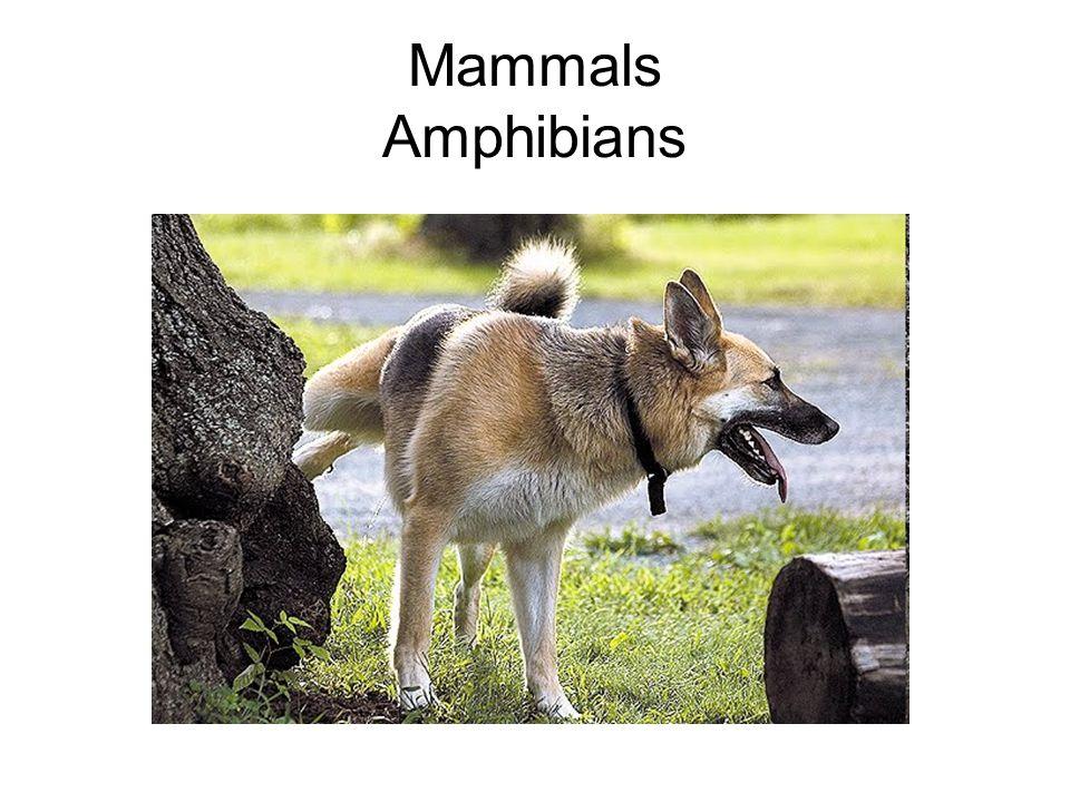Mammals Amphibians