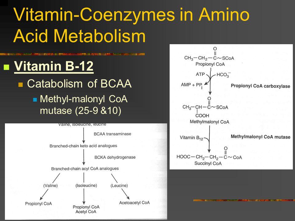 Vitamin-Coenzymes in Amino Acid Metabolism Vitamin B-12 Catabolism of BCAA Methyl-malonyl CoA mutase (25-9 &10)