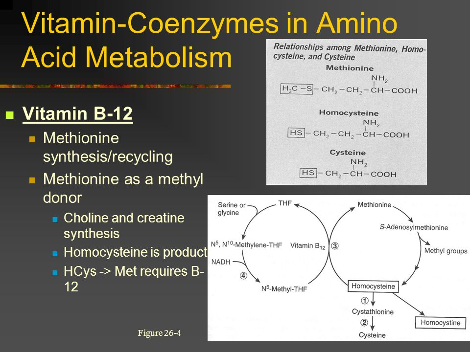Vitamin-Coenzymes in Amino Acid Metabolism Vitamin B-12 Methionine synthesis/recycling Methionine as a methyl donor Choline and creatine synthesis Hom