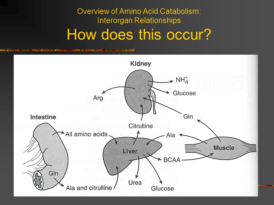 Overview of Amino Acid Catabolism: Interorgan Relationships How does this occur?