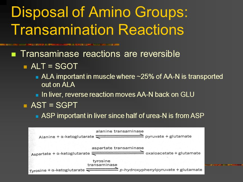 Disposal of Amino Groups: Transamination Reactions Transaminase reactions are reversible ALT = SGOT ALA important in muscle where ~25% of AA-N is tran