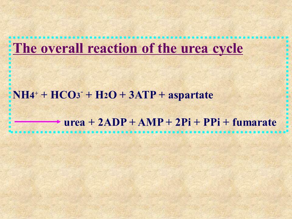 The overall reaction of the urea cycle NH 4 + + HCO 3 - + H 2 O + 3ATP + aspartate urea + 2ADP + AMP + 2Pi + PPi + fumarate