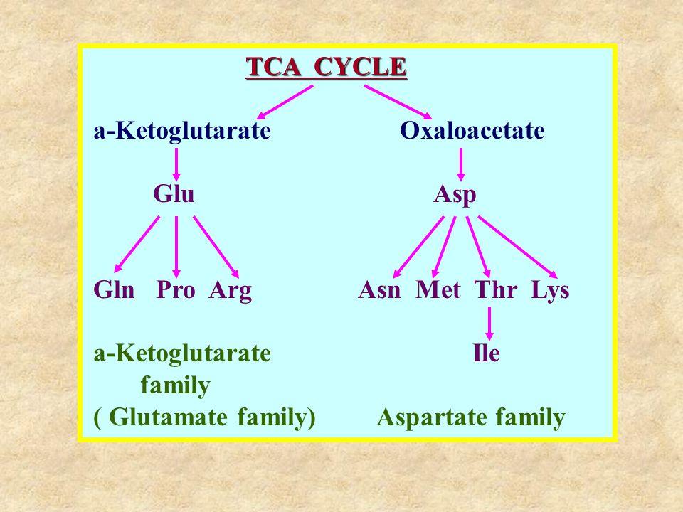 TCA CYCLE a-Ketoglutarate Oxaloacetate Glu Asp Gln Pro Arg Asn Met Thr Lys a-Ketoglutarate Ile family ( Glutamate family) Aspartate family