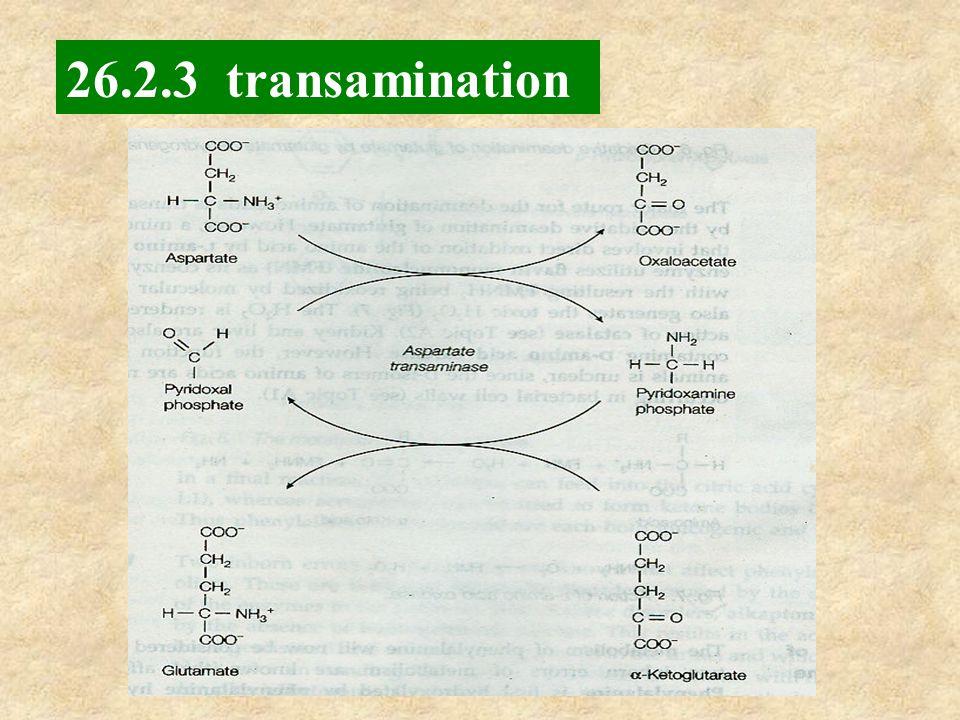 26.2.3 transamination