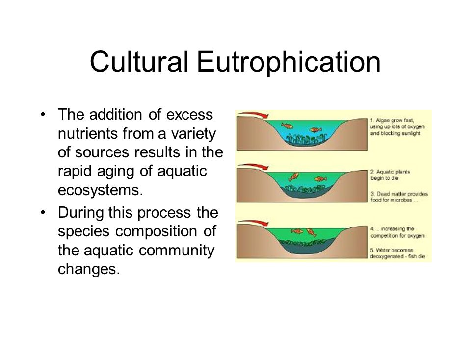 Cultural Eutrophication The addition of excess nutrients from a variety of sources results in the rapid aging of aquatic ecosystems. During this proce