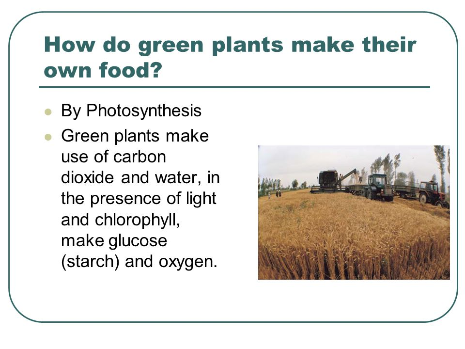 How do green plants make their own food.