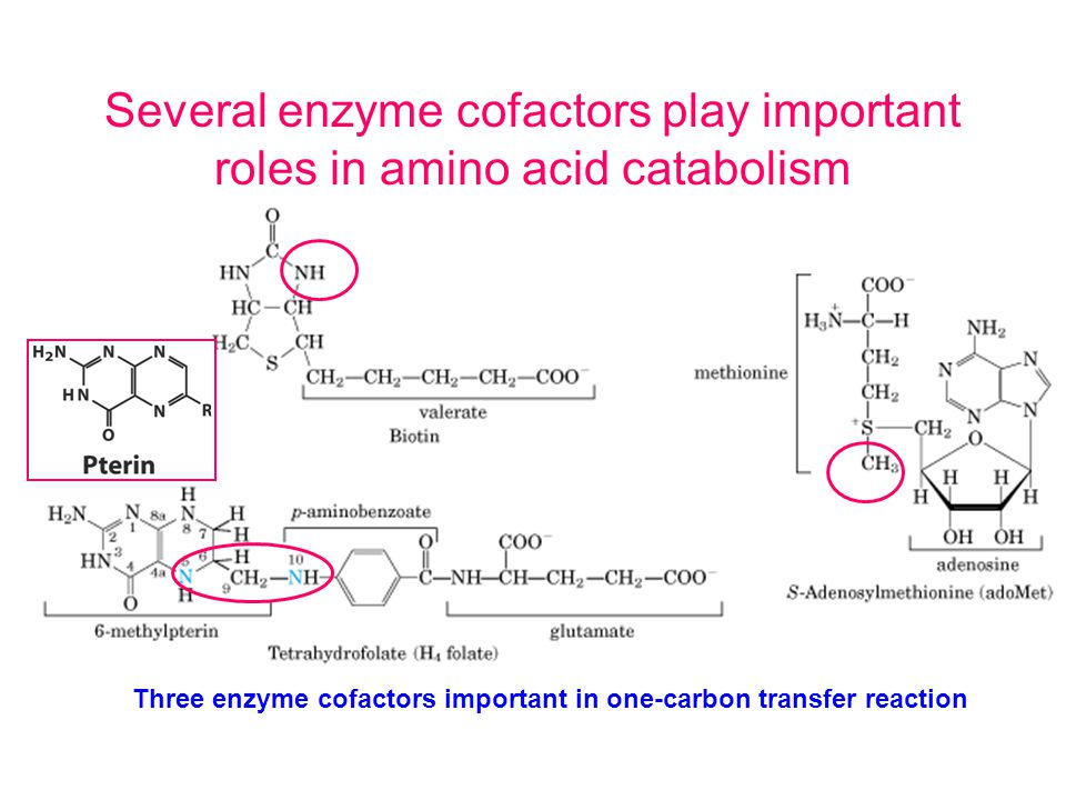 Several enzyme cofactors play important roles in amino acid catabolism Three enzyme cofactors important in one-carbon transfer reaction