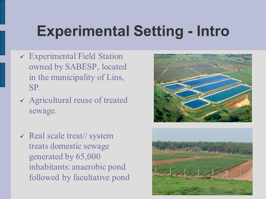 Experimental Setting Facultative pond effluent fed to tertiary treatment pilot ponds.