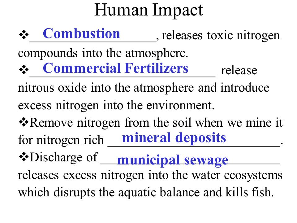 Nitrogen in the air animal protein dead plants & animals urine & feces ammonia nitrites nitrates plant made protein decomposition by bacteria & fungi bacteria (nitrifying bacteria) nitrates absorbed denitrifying bacteria root nodules (containing nitrogen fixing bacteria) nitrogen fixing plant eg pea, clover bacteria