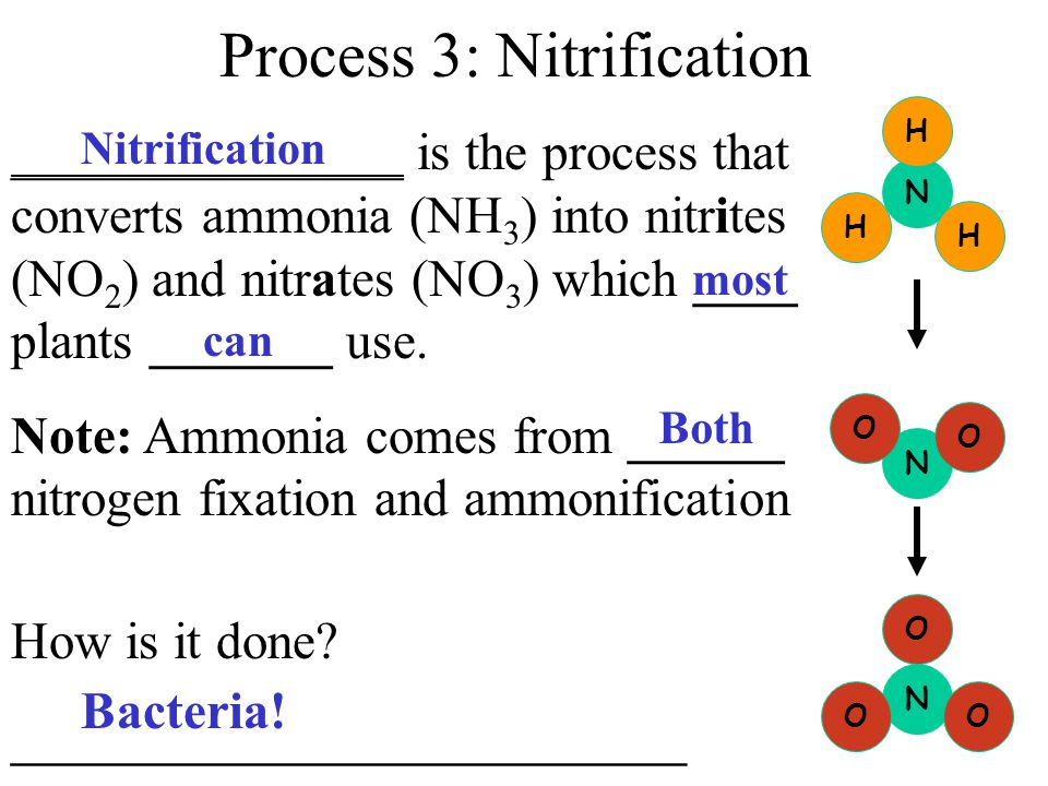 Process 2: Ammonification _____________________ - After all the living organisms have used the ___________________, decomposer bacteria convert the ni