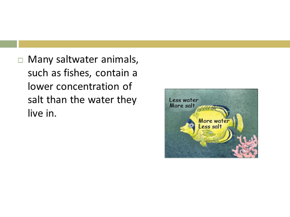  Many saltwater animals, such as fishes, contain a lower concentration of salt than the water they live in.