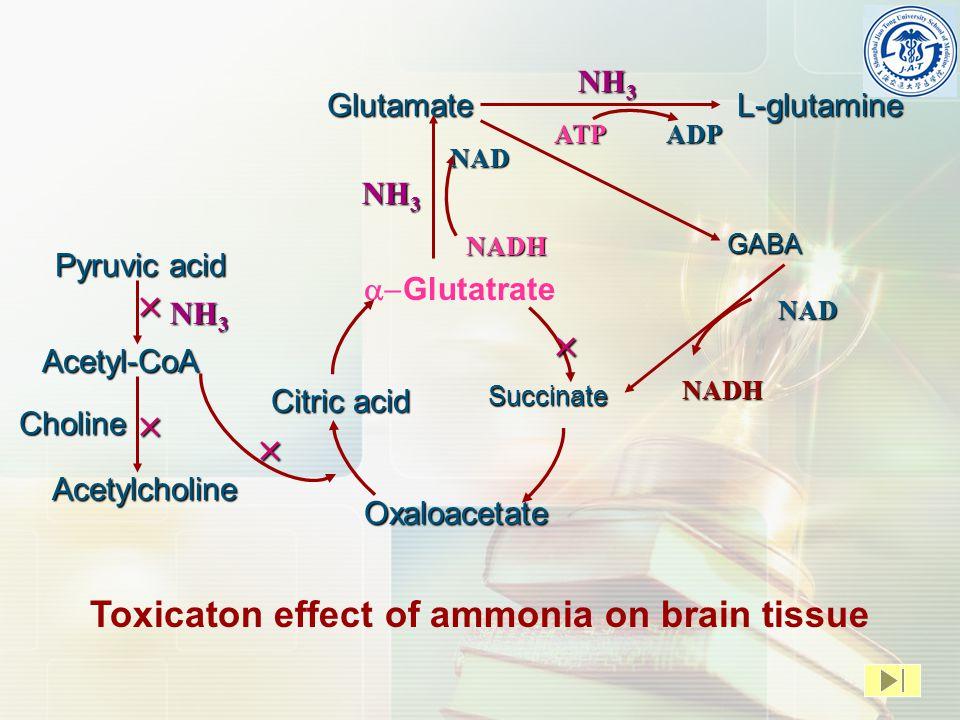 GlutamateL-glutamine  Glutatrate GABA Citric acid Oxaloacetate Succinate NH 3 ATPADP NAD NADH Pyruvic acid Acetyl-CoA Acetylcholine Choline    NADH NAD Toxicaton effect of ammonia on brain tissue  NH 3