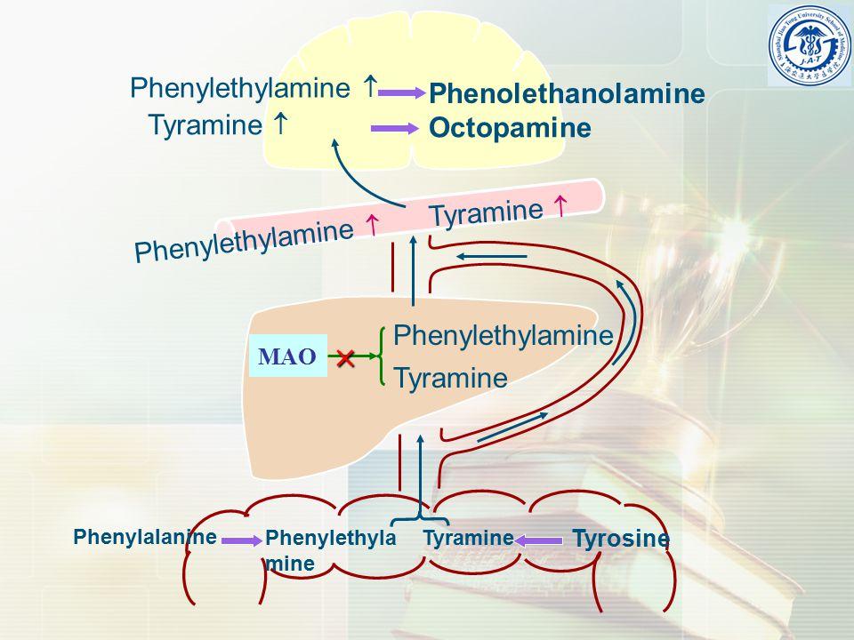 Phenylalanine Tyrosine Phenylethyla mine Tyramine Phenylethylamine Tyramine MAO  Phenylethylamine  Tyramine  Phenolethanolamine Octopamine Tyramine  Phenylethylamine 