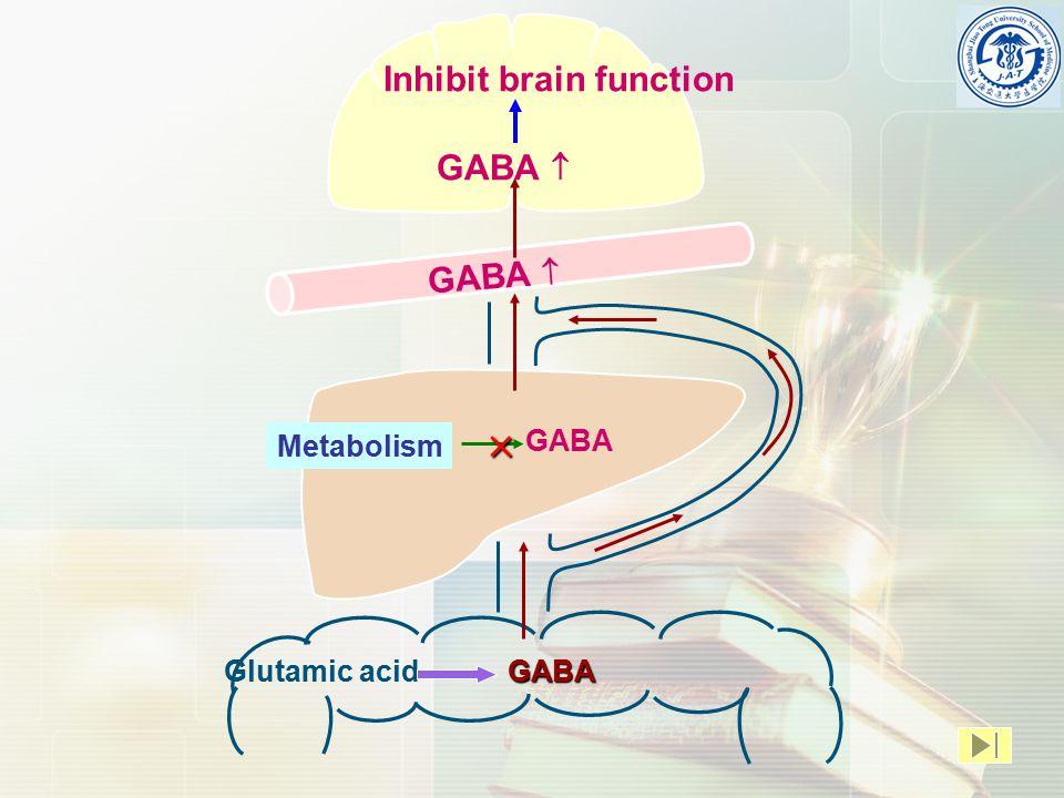 Glutamic acidGABA Metabolism  GABA GABA  Inhibit brain function
