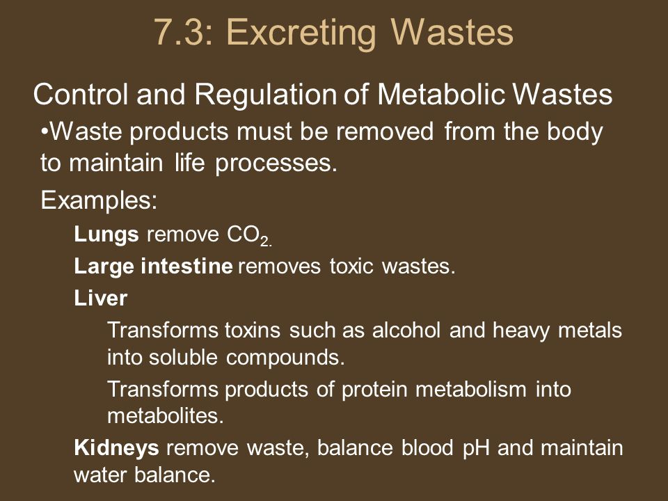 7.3: Excreting Wastes Control and Regulation of Metabolic Wastes Waste products must be removed from the body to maintain life processes.